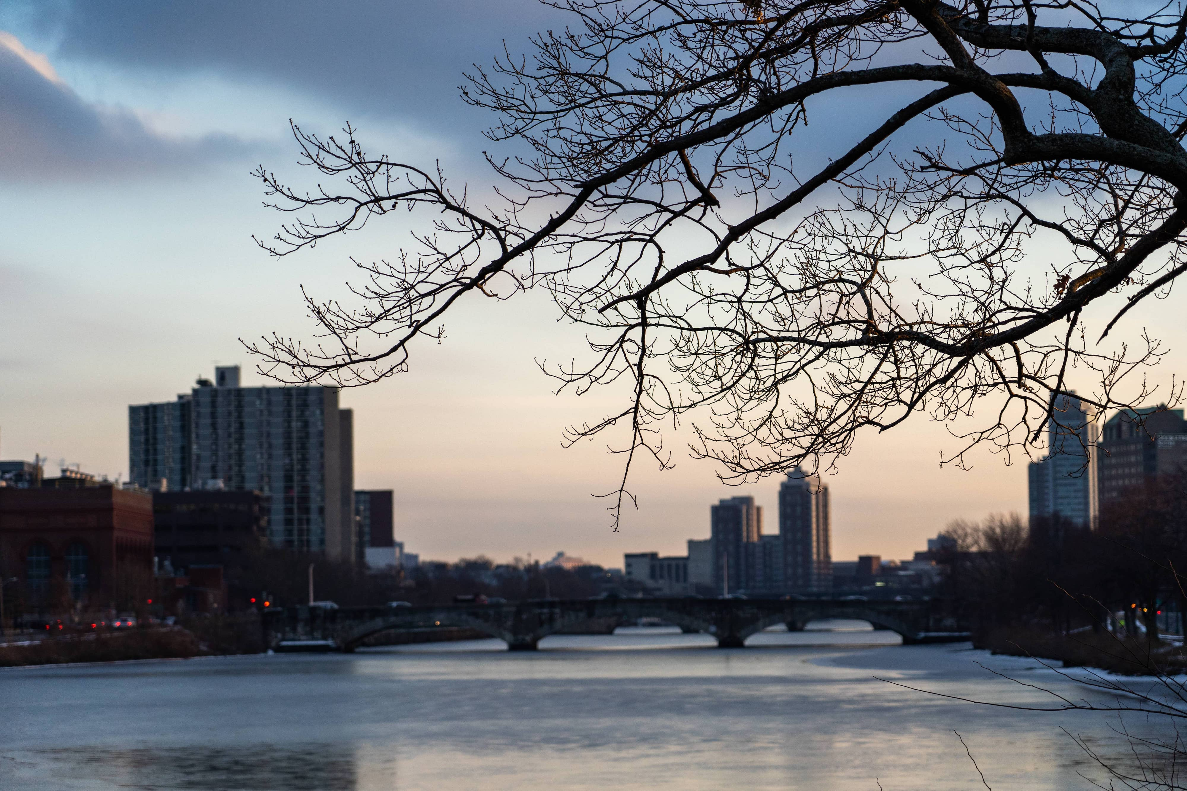Photo of tree branch in foreground, river and bridge in background.